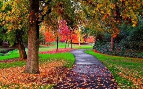 Autumn-in-the-Park-autumn-25517310-500-313