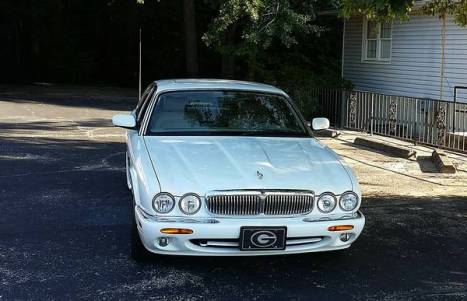 Waxed Jaguar