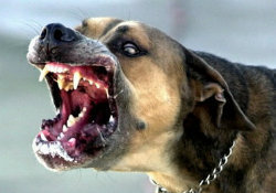 vicious-dogs-module-5ee95aa0e5064756