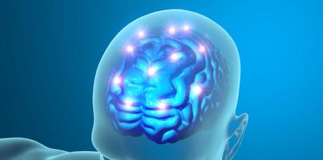 brain+function